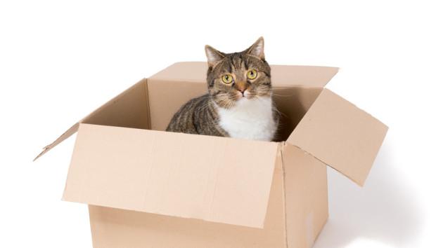 Umzug auf vier Pfoten – Wenn Haustiere umziehen